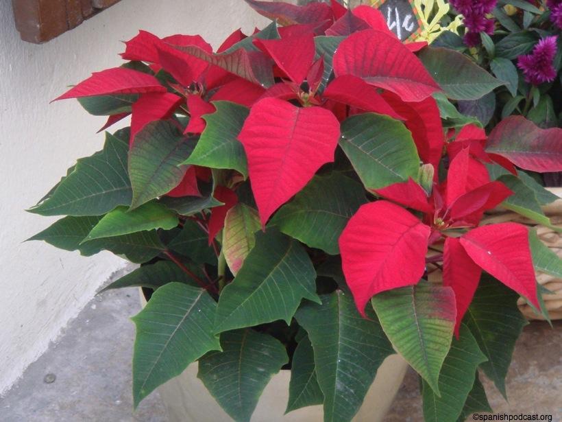 dsc02830 jpg On planta de hojas rojas