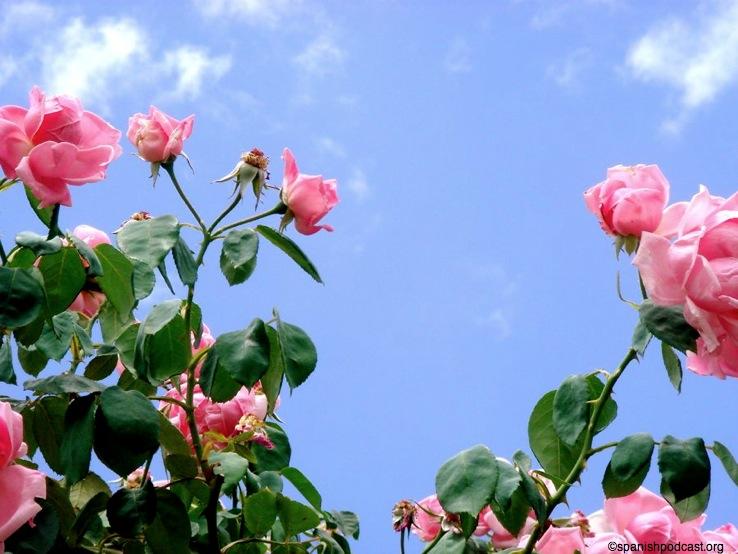 En la rosaleda se consiguen perspectivas como esta, las rosas ...