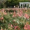 jardín en buenos aires