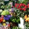 puesto flores zoom